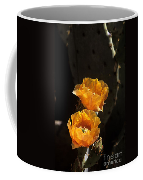 Cactus Coffee Mug featuring the photograph Apricot Blossoms by Kathy McClure