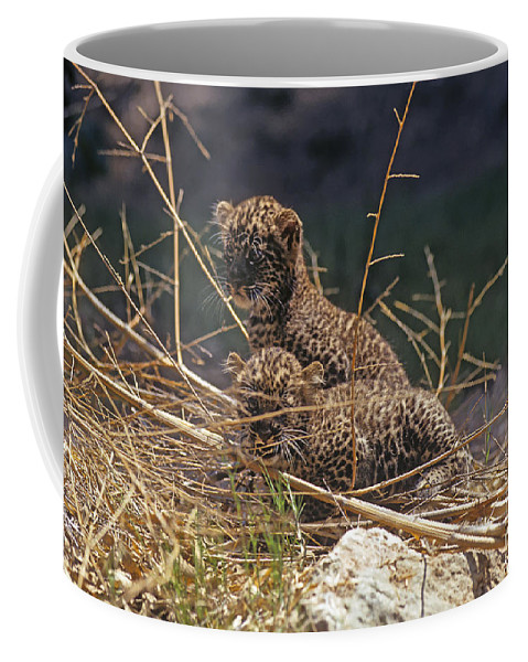 Leopard Coffee Mug featuring the photograph Arabian Leopard Panthera Pardus Cubs by Eyal Bartov