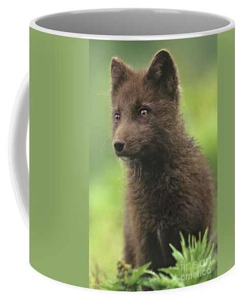 North America Coffee Mug featuring the photograph Arctic Fox Portrait Alaska Wildlife by Dave Welling
