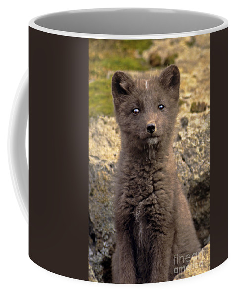 North America Coffee Mug featuring the photograph Arctic Fox Pup Alaska Wildlife by Dave Welling