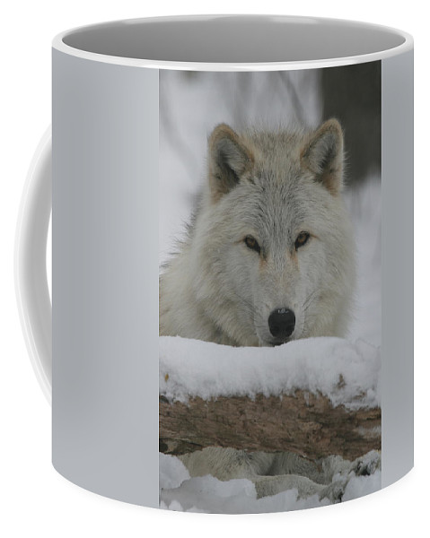 White Coffee Mug featuring the photograph Arctic Wolf by Ken Keener