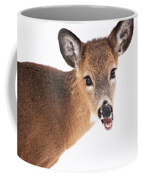 Deer Coffee Mug featuring the photograph Are You Done Taking Pictures by Karol Livote