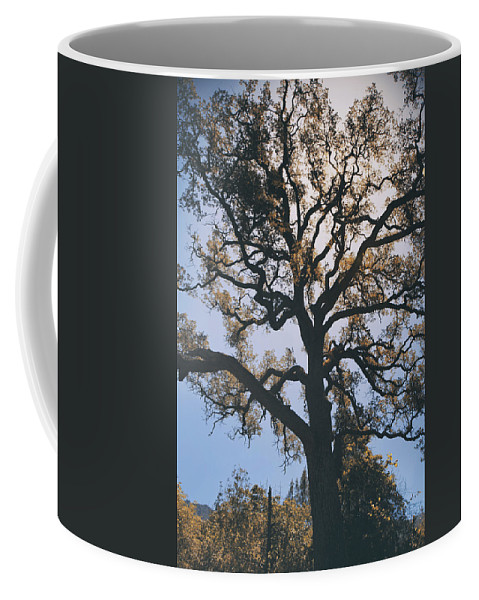 Mt. Diablo State Park Coffee Mug featuring the photograph As We Grow And Change by Laurie Search