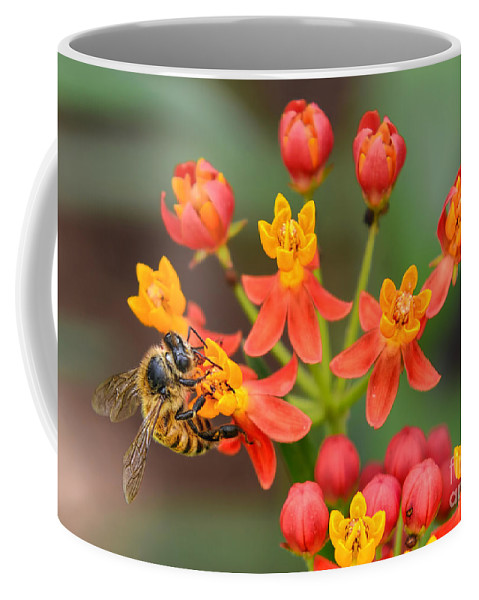Scarlet Milkweed Coffee Mug featuring the photograph Asclepias Curassavica And Bee by Olga Hamilton