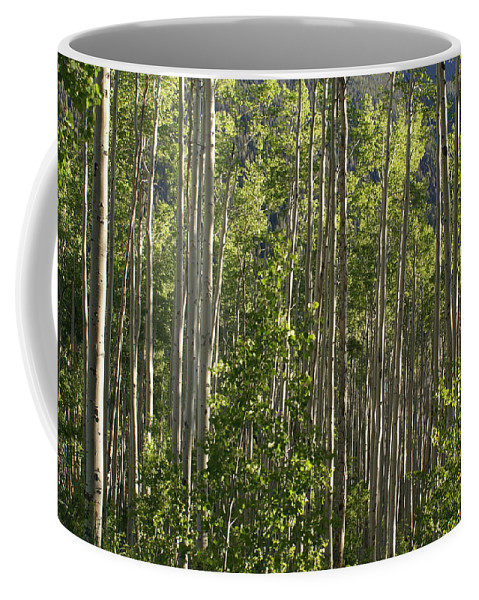Aspen Coffee Mug featuring the photograph Aspen Along Independence Pass by Jacqueline Russell