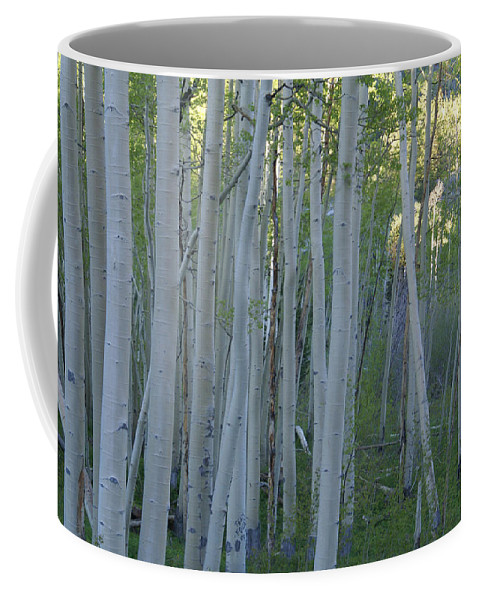Aspen Tree Coffee Mug featuring the photograph Aspen Grove IIi by Jacqueline Russell