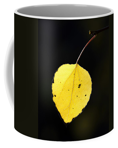 Aspen Coffee Mug featuring the photograph Aspen Leaf In Fall by Gary Langley