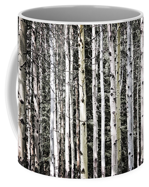 Trees Coffee Mug featuring the photograph Aspen Tree Trunks by Elena Elisseeva
