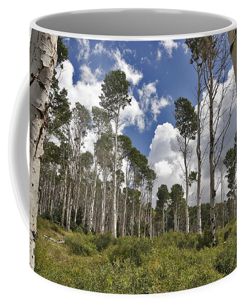 3scape Coffee Mug featuring the photograph Aspen Grove by Adam Romanowicz