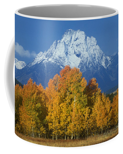 Dave Welling Coffee Mug featuring the photograph Aspens Fall Mount Moran Grand Tetons National Park Wyoming by Dave Welling