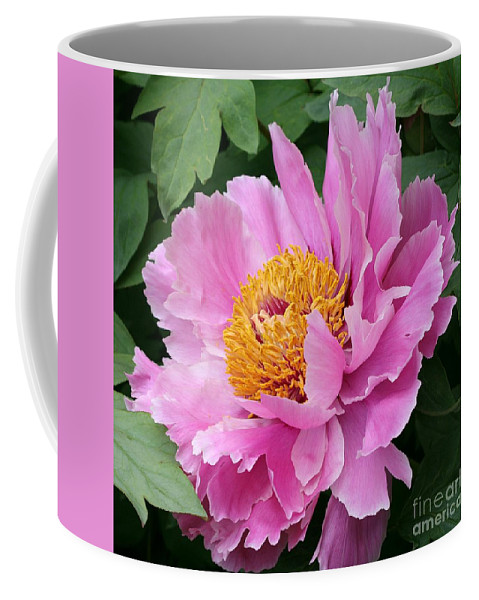 Pink Peony Coffee Mug featuring the photograph Attractive Pink Peony by Christiane Schulze Art And Photography