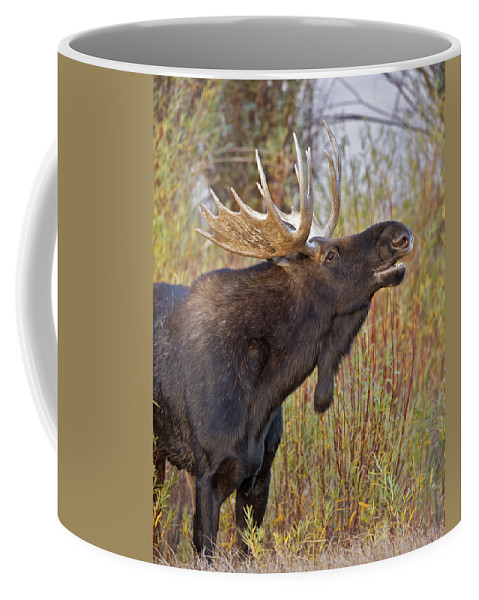 Bull Coffee Mug featuring the photograph Autumn Bull Moose II by Gary Langley