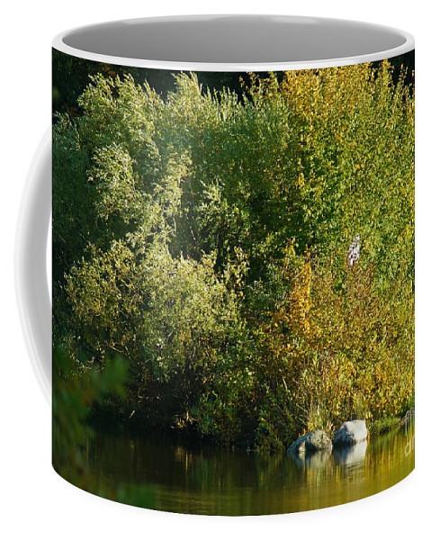 Nature Coffee Mug featuring the photograph Autumn Colors 1 by Rudi Prott