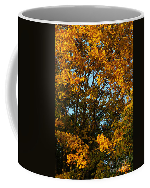 Nature Coffee Mug featuring the photograph Autumn Colors 11 by Rudi Prott