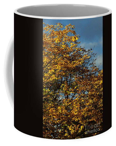 Nature Coffee Mug featuring the photograph Autumn Colors 5 by Rudi Prott