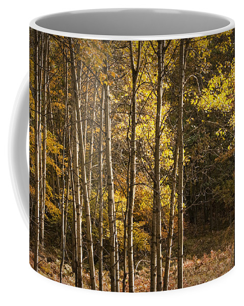 Art Coffee Mug featuring the photograph Autumn Forest Scene With Birches In West Michigan by Randall Nyhof