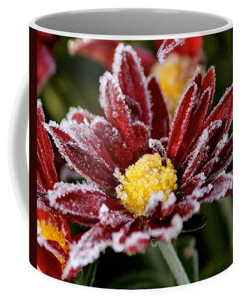 Flower Coffee Mug featuring the photograph Autumn Frost by Tiffany Erdman