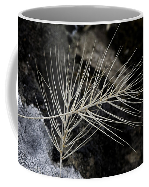 Dried Grass Coffee Mug featuring the photograph Autumn Grasses by Betty Depee