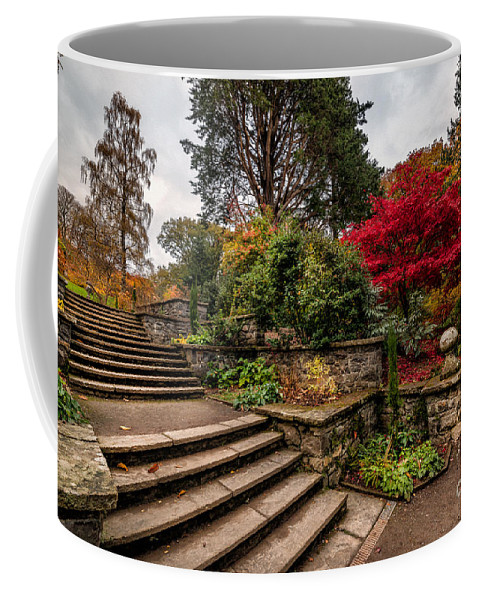 Acer Coffee Mug featuring the photograph Autumn In The Garden by Adrian Evans