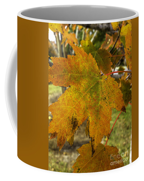 Maple Leaf Coffee Mug featuring the photograph Autumn Leaves by Dale Powell