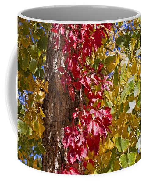 Texas Coffee Mug featuring the photograph Autumn Leaves In Palo Duro Canyon 110213.97 by Ashley M Conger