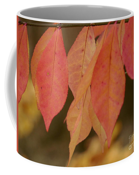 Red Coffee Mug featuring the photograph Autumn Leaves by Rowena Throckmorton
