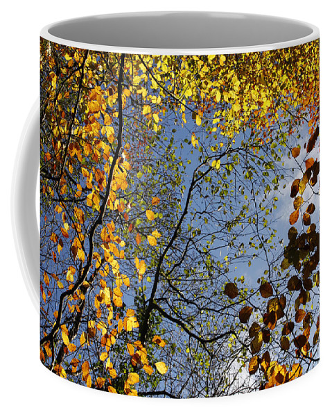 Background Coffee Mug featuring the photograph Autumn Leaves by Steve Ball