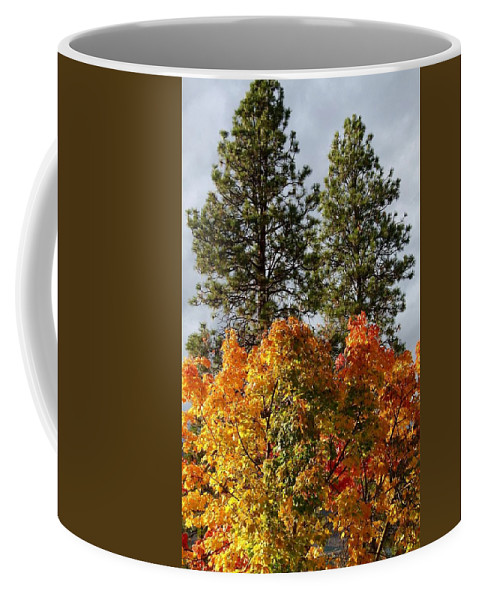 Autumn Maple With Pines Coffee Mug featuring the photograph Autumn Maple With Pines by Will Borden
