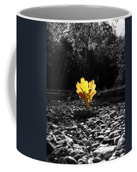 Autumn Woodland Coffee Mug featuring the photograph Autumn Oak Isolations by Terri Waters
