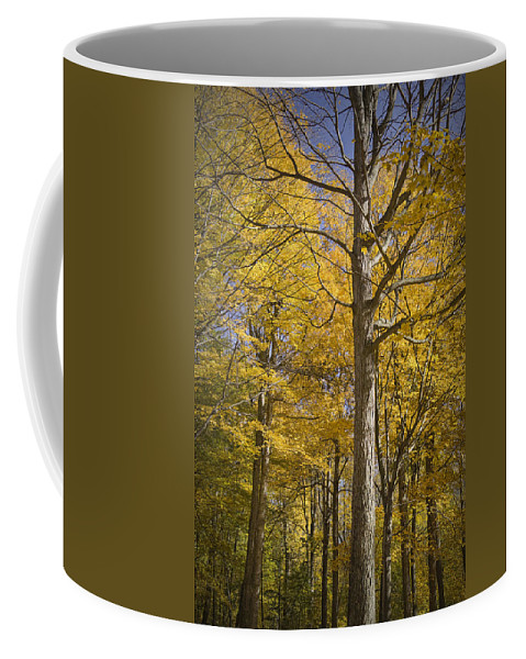 Art Coffee Mug featuring the photograph Autumn Orange Forest Colors At Hager Park No.1189 by Randall Nyhof