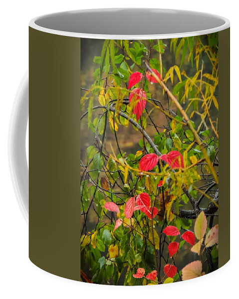 Autumn Coffee Mug featuring the photograph Autumn Rain by Robert Mitchell