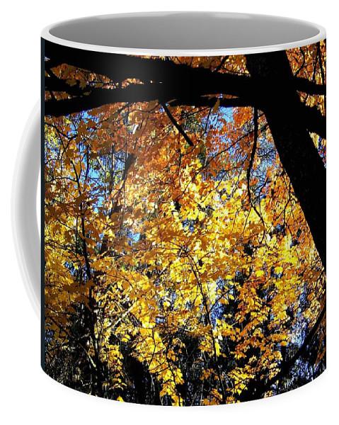 Autumn Splendor 3 Coffee Mug featuring the photograph Autumn Splendor 3 by Will Borden