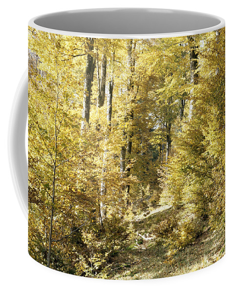 Nature Coffee Mug featuring the photograph Autumnal Sunny Underwood by Patrick Kessler