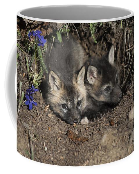 Red Fox Coffee Mug featuring the photograph Fox-avoidance by Wildlife Fine Art