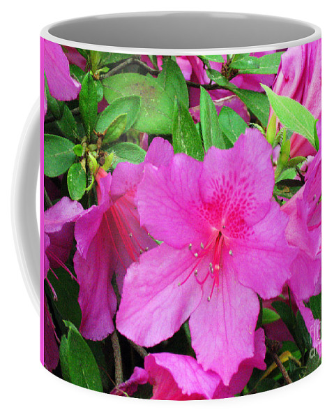 Azaleas Coffee Mug featuring the photograph Azaleas by Lydia Holly