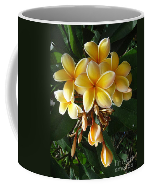 Aztec Gold Coffee Mug featuring the photograph Aztec Gold Plumeria by Mary Deal