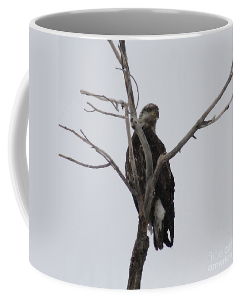 Bald Eagle Coffee Mug featuring the photograph Baby Bald Eagle by Brandi Maher