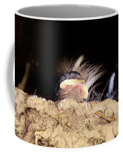 Bird Coffee Mug featuring the photograph Baby Barn by Art Dingo