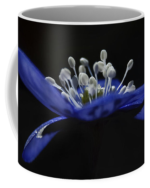 Festblues Coffee Mug featuring the photograph Baby Blues.. by Nina Stavlund