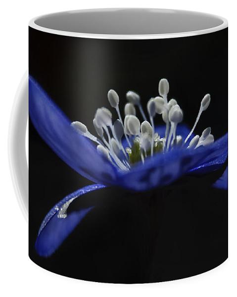 Festblues Coffee Mug featuring the photograph Baby Blues.. by Nina Stavlund