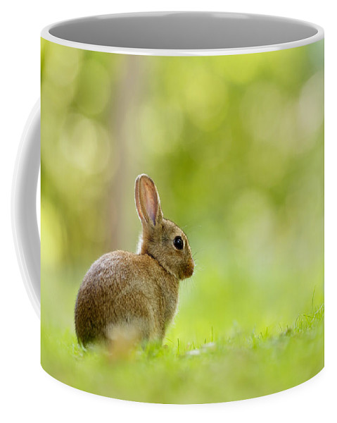 Afternoon Coffee Mug featuring the photograph Baby Bunny In The Forest by Roeselien Raimond