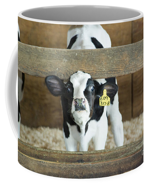 Cow Coffee Mug featuring the photograph Baby Cow by Louise Magno