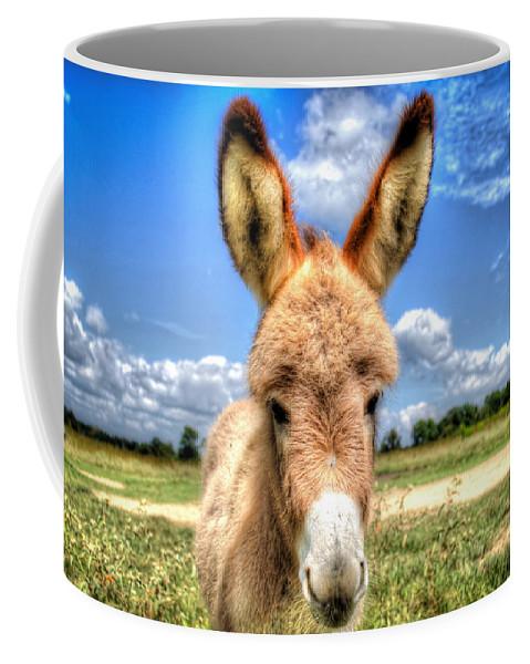 Baby Donkey Coffee Mug featuring the photograph Baby Donkey by Anita Cumbra