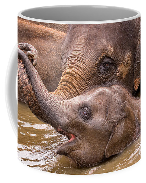 Nature Coffee Mug featuring the photograph Baby Elephant by Louise Heusinkveld