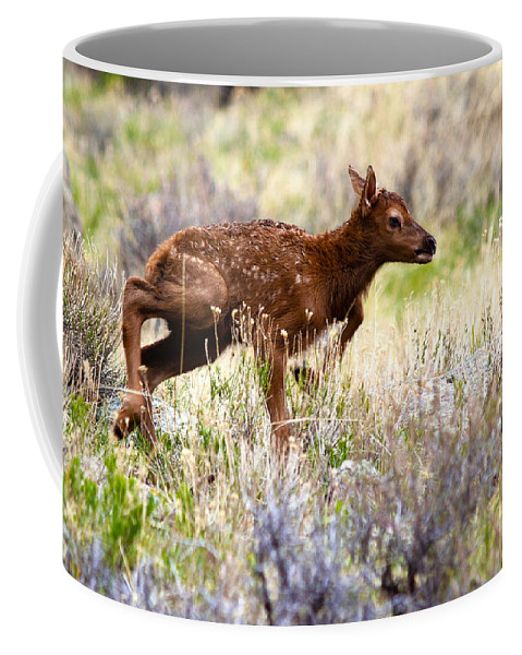 Baby Elk Coffee Mug featuring the photograph Baby Elk by Shane Bechler