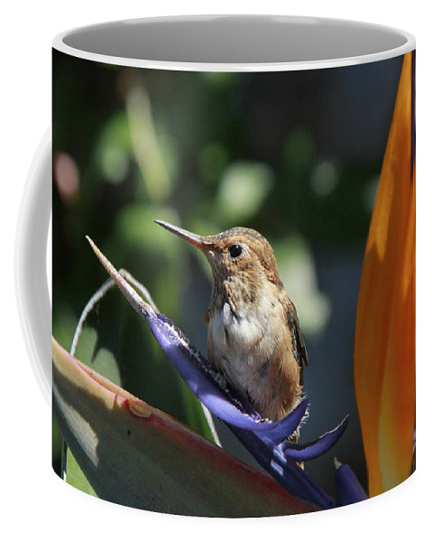 Baby Coffee Mug featuring the photograph Baby Hummingbird On Flower by Diana Haronis