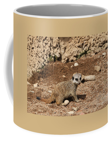 Meerkat Coffee Mug featuring the photograph Baby Meerkat by Judy Whitton