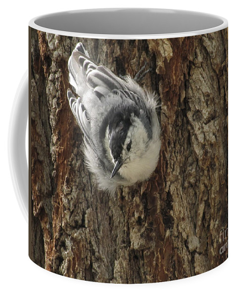 White Breasted Nuthatch Coffee Mug featuring the photograph Baby Nuthatch by Marilyn Smith