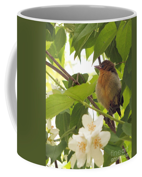 Baby Bird Coffee Mug featuring the photograph Baby Oriole by Marilyn Smith