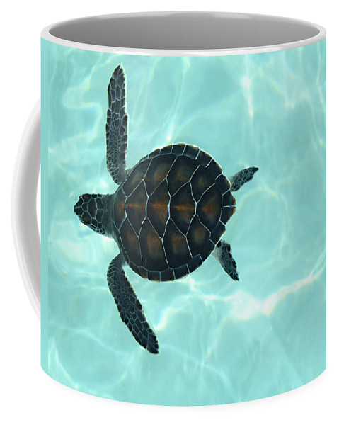 Baby Sea Turtle Coffee Mug featuring the photograph Baby Sea Turtle by Ellen Henneke